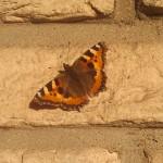 Schmetterling auf dem Balkon | https://ferienwohnung-neiling-niederrhein.de/