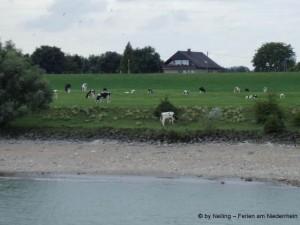 Nur eine Wiese trennt die Ferienwohnung vom Rhein.